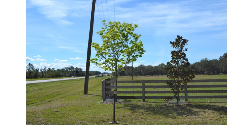cattle ranch for sale desoto county