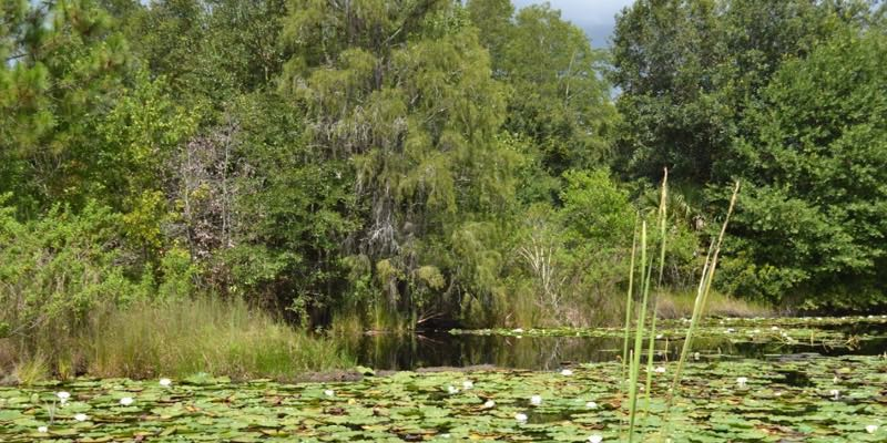 Residential Development Acreage in Clermont