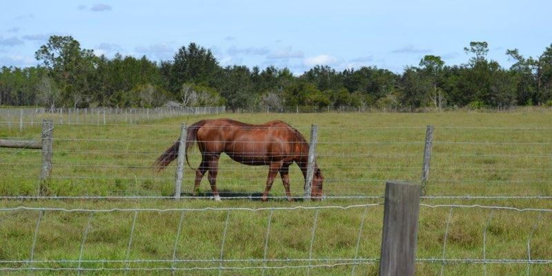 ranch di bestiame in vendita in Florida