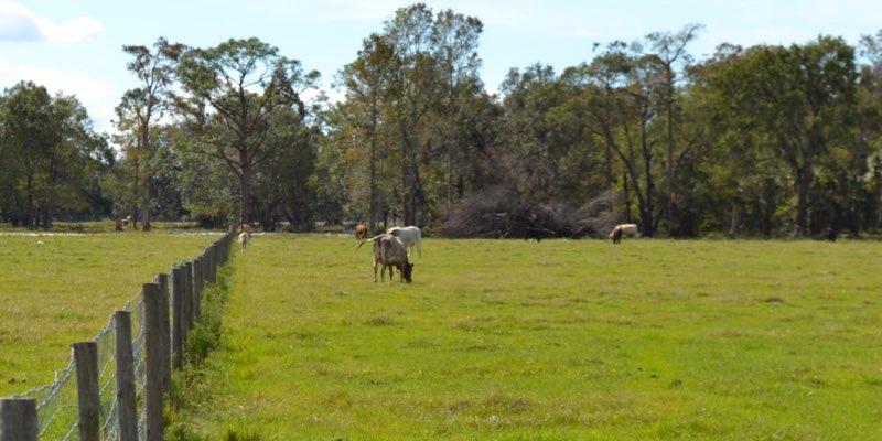 الماشية مزرعة للبيع في الولايات المتحدة الأمريكية