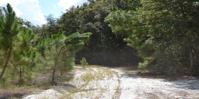 Land For Sale in Clermont Florida