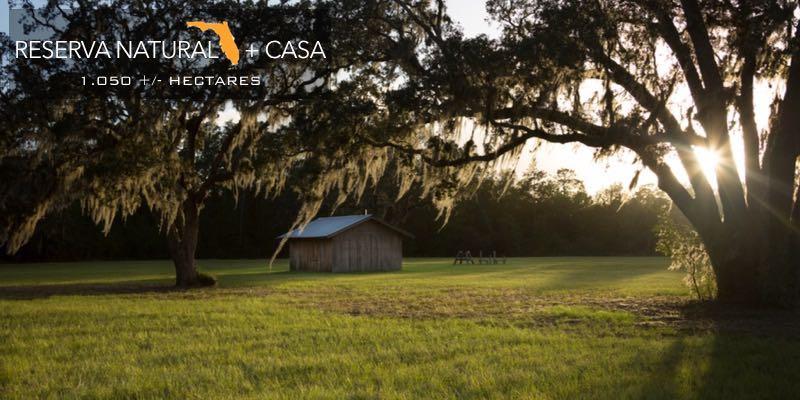 Floresta à Venda Florida EUA