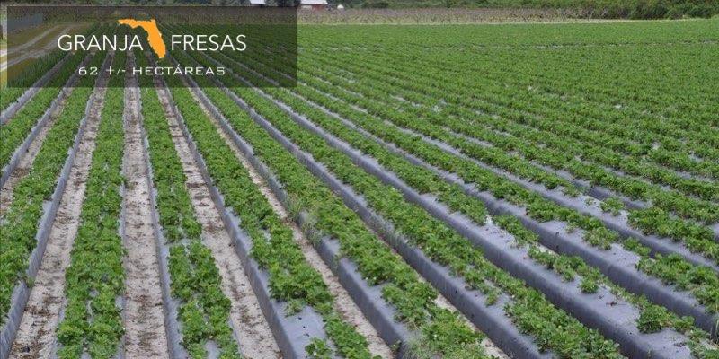 Granja de Fresas en Venta en Florida