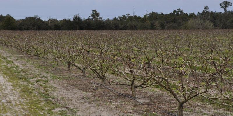 granja de duraznos en venta en estados unidos