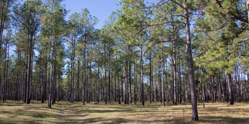 Waterfront Land For Sale in Gilchrist County
