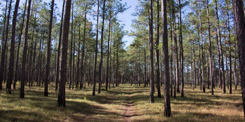 Residential Land For Sale in Gilchrist County