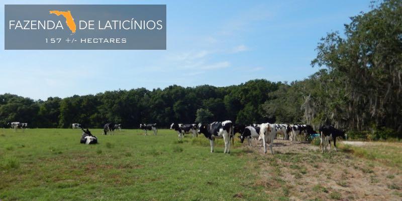 Fazenda Laticínios Venda Florida EUA