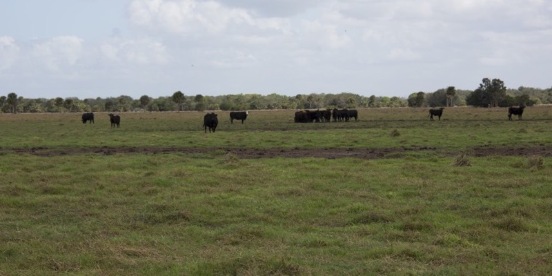 Largest Ranches For Sale in Florida