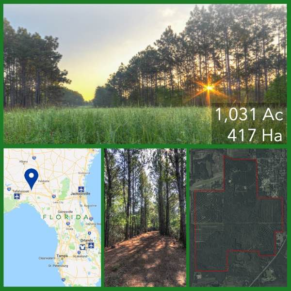 1031 Acre Florida Commercial Timberland For Sale