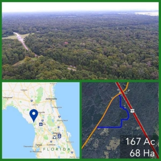 167 Acre Florida Hunting and Timberland For Sale