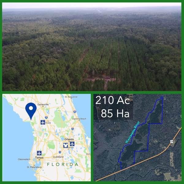 210 Acre Florida Riverfront Land For Sale