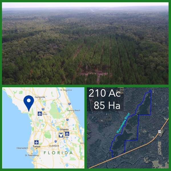 210 Acre Florida Riverfront Land For Sale