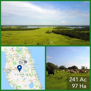 241 Acre Florida Cattle Pasture For Sale