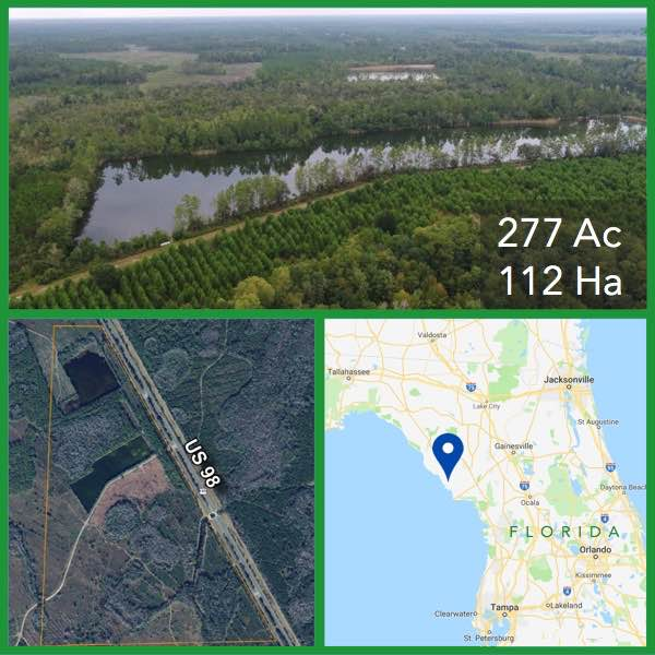 277 Acre Florida Hunting and Timberland For Sale