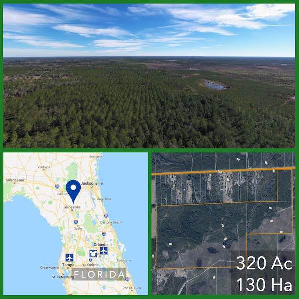 320 Acre Florida Hunting and Pasture Land For Sale