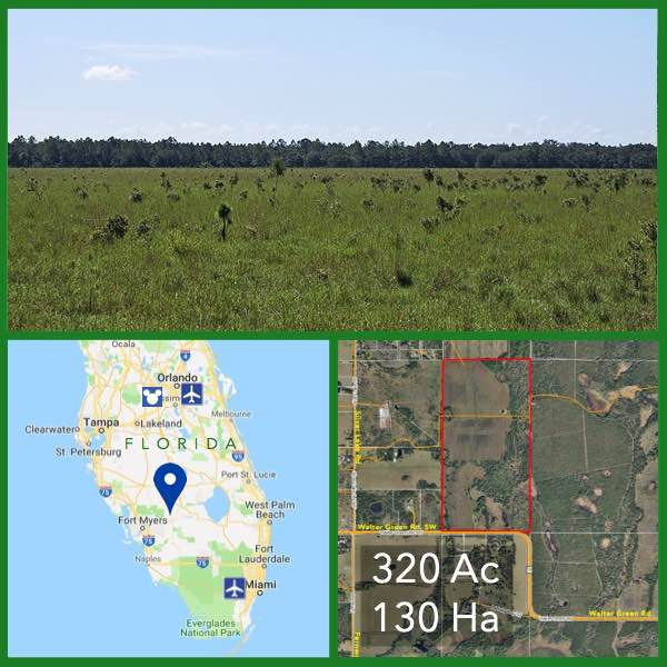 320 Acre Florida Cattle Ranch For Sale
