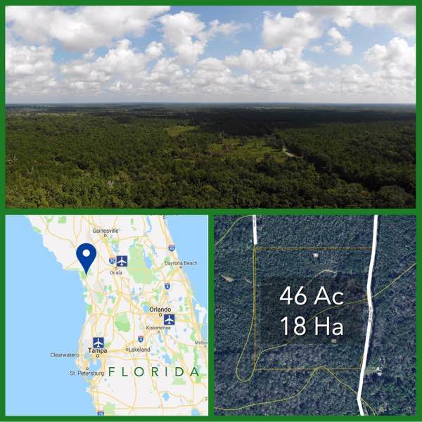 46 Acre Florida Hunting and Timberland For Sale