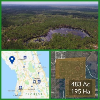 483 Acre Florida Hunting and Timberland For Sale