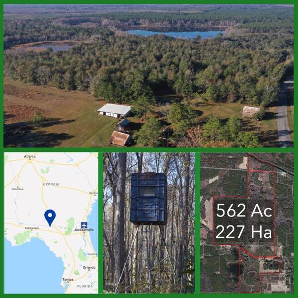 562 Acre Florida Hunting and Timberland For Sale