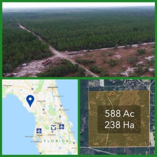 588 Acre Florida Commercial Timberland For Sale