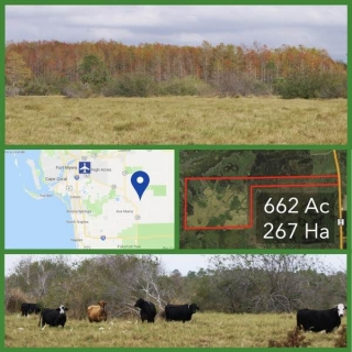 662 Acre Florida Hunting and Cattle Land For Sale
