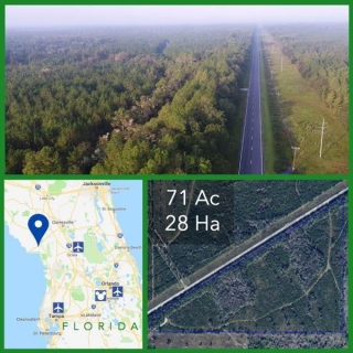 71 Acre Florida Hunting Land For Sale