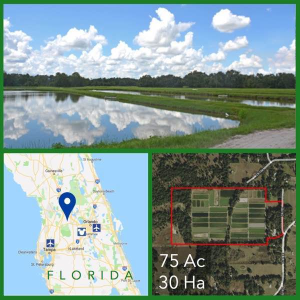 75 Acre Florida Fish Farm For Sale