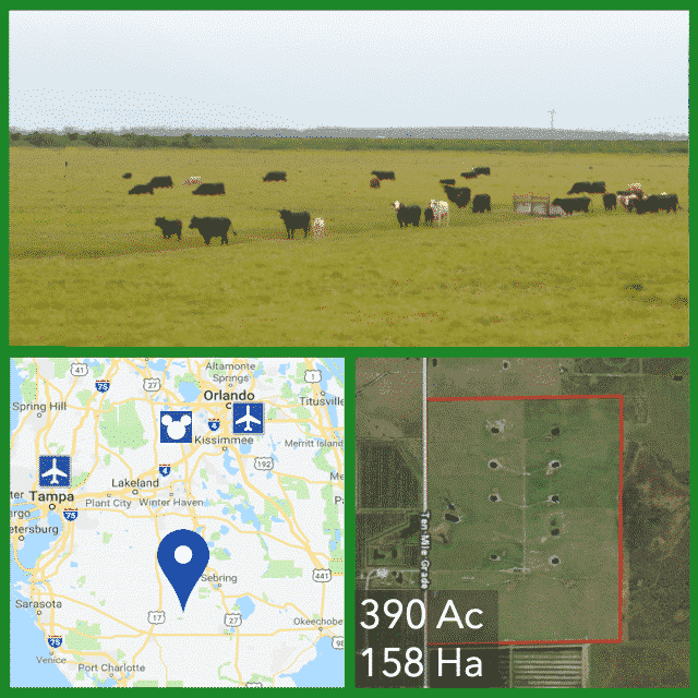390 Acre Organic Dairy Farm For Sale in Florida