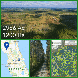 2966 Acre Florida Timberland For Sale