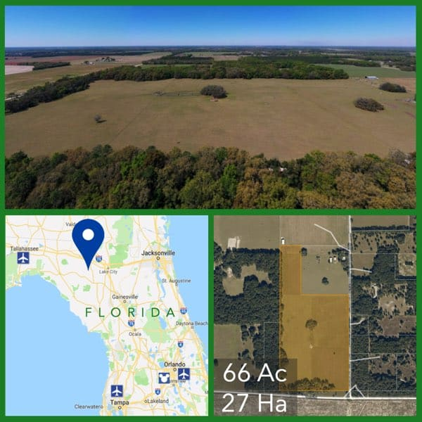 66 Acre Florida Pasture Land For Sale