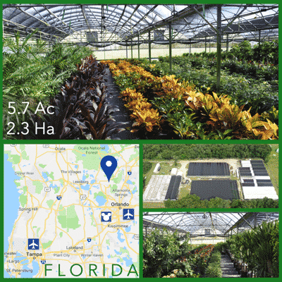 Florida Foliage Nursery For Sale