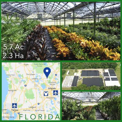 Florida Foliage Nursery For Sale